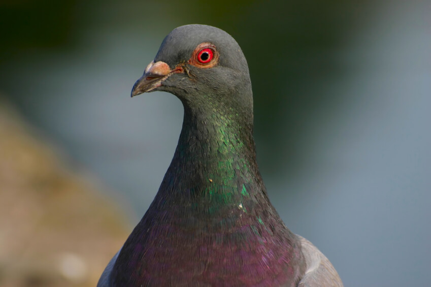 Does Your Website Make Google Pigeon Happy?