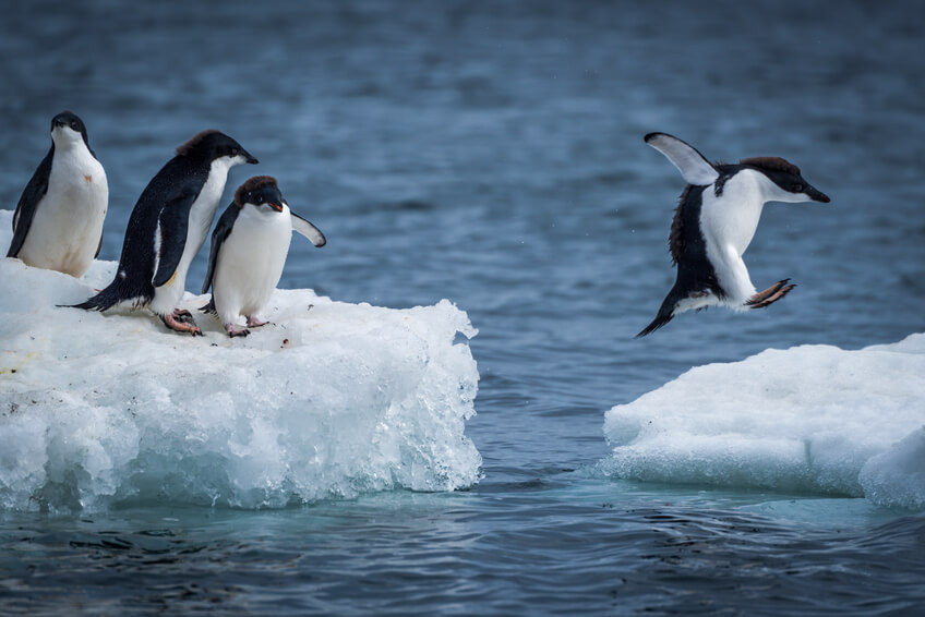 Website Owners Rejoice! Google Penguin Real-Time Is a Big Win