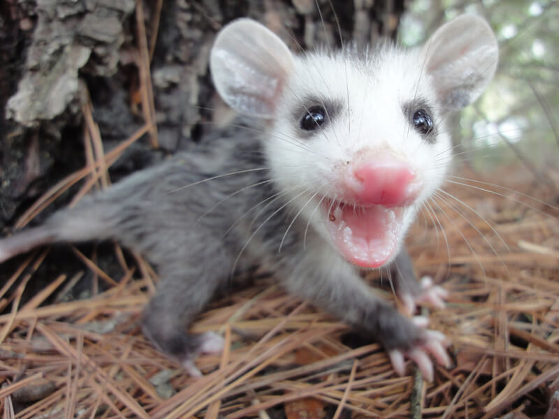 Google Possum is Live… Now What?